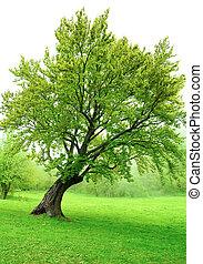 hermoso, verde, primavera, árbol, con, fresco, hojas, y, pasto o césped