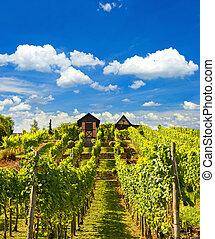 hermoso, viña, paisaje, con, nublado, cielo azul