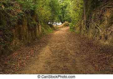 hermoso, vibrante, colorido, bosque de otoño, escena, con, superb, detalle, y, dorado, colores, de, trayectoria, primero, a, exuberante, árboles