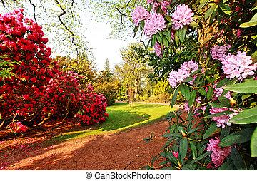 hermoso, viejo, parque, con, azalea, árboles