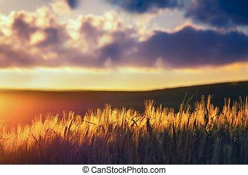 hermoso, vista, de, el, típico, toscano, paisaje, en, ocaso