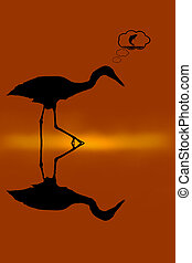 Heron and shadow - The herons walk in the swamp to find...