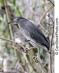 Heron bird on branch