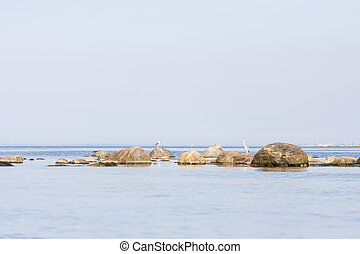 Heron bird stand on a rock