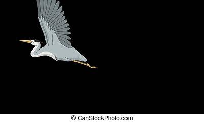 Heron flies up into the sky alpha mate