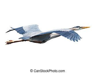 Heron Flying