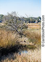 Heron in Creek Bed of Wetland Marsh