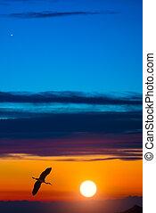 Heron in flight at sunset