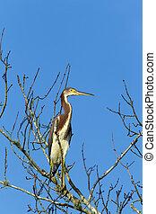 Heron in leafless tree.