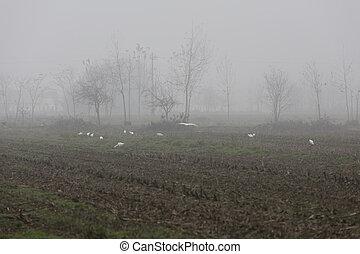 heron in the autumn mist