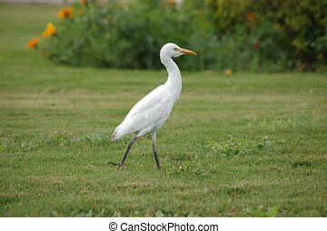 Heron in the park on the green grass