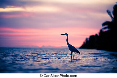 Heron in the water at sunset