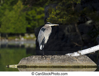 Heron in the Wilderness