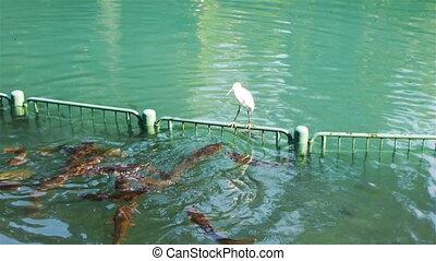 Heron on Jordan River in Israel - Heron sitting on fence on...