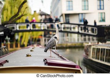 Heron or ardea cinerea in Little Venice, Camden town,...