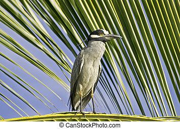 Heron perched on a palm leaf