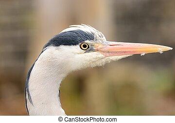 Heron portrait