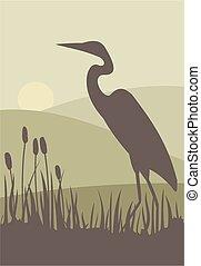 Heron silhouette - A heron stalks prey in a reed bed.
