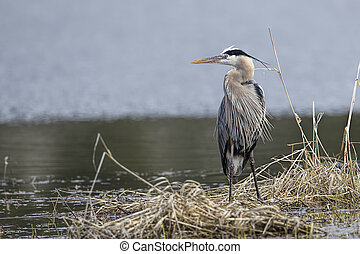 Heron stands in the grass.