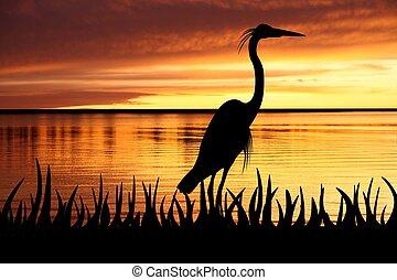 Heron - Bird silhouette against an orange sunset