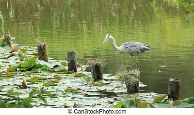 heron - This bird is a heron.