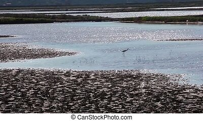 Heron - View of heron in the Salt evaporation ponds in...