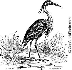 Heron, vintage engraving.