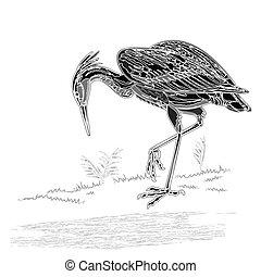 Heron water bird vintage engraving