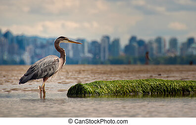 Heron With Log And Vancouver Skyline