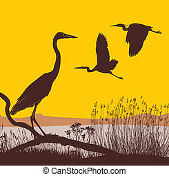 vector illustration herons on the lake at sunrise