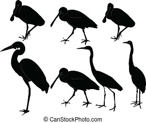 herons collection - vector - illustration of herons...