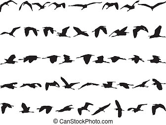 Forty-four herons flying black silhouettes