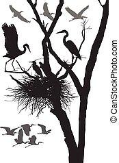 Herons nest