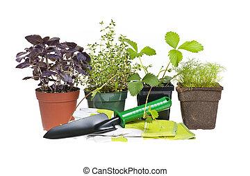 herramientas de jardinería, y, plantas