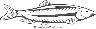 Herring fish vector design isolated on a white background