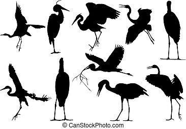 Herron Silhouette vector illustration