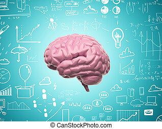 hersenen, 3d