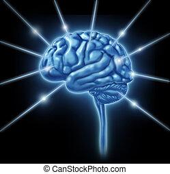 hersenen, aansluitingen, intelligentie
