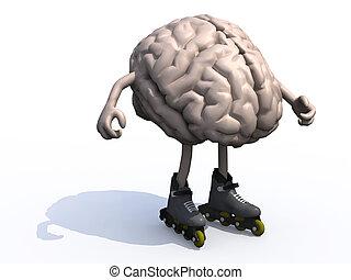 hersenen, armen, benen, rollerskates, menselijk