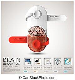 hersenen, capsule, infographic, leren, opleiding, pil