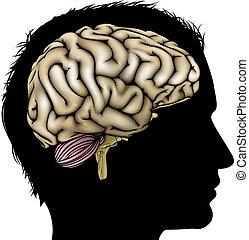 hersenen, concept, man