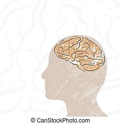 hersenen, hoofd
