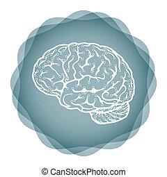hersenen, -, idee, illustratie, vernieuwend