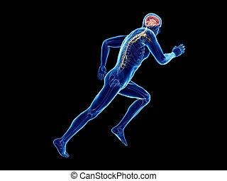 hersenen, joggers