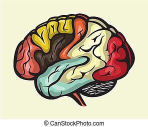 hersenen, lateraal, menselijk, aanzicht