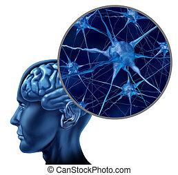 hersenen, medisch symbool, menselijk