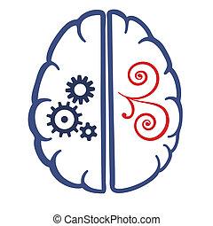 hersenen, onderdelen, twee, menselijk