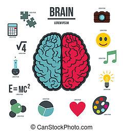 hersenen, stijl, set, menselijk, infographics, plat