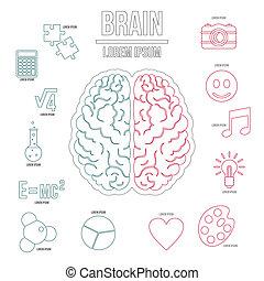 hersenen, stijl, set, menselijk, schets, infographics