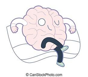hersenen, suprematie, verzameling